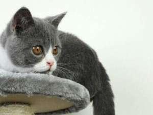 猫咪霉菌感染症